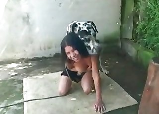 Dalmatian in awesome inexperienced zoophilia